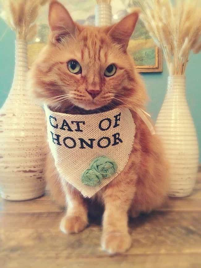 And Don't Forget It is listed (or ranked) 3 on the list Purrfect Pictures of Cat Weddings