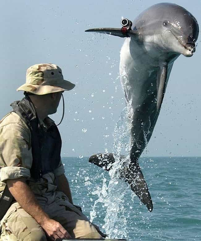 Georges the Dolphin Ruins Crim... is listed (or ranked) 4 on the list Helpful Animals Besides Dogs That Have Assisted the Cops