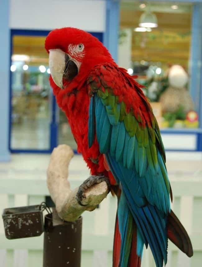 Parrot's Shrieking Helps... is listed (or ranked) 3 on the list Helpful Animals Besides Dogs That Have Assisted the Cops