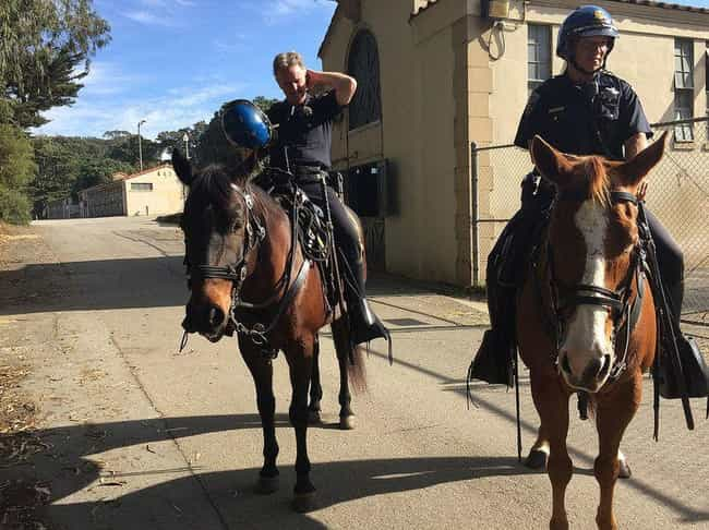 Horses Help Officers wit... is listed (or ranked) 4 on the list Helpful Animals Besides Dogs That Have Assisted the Cops