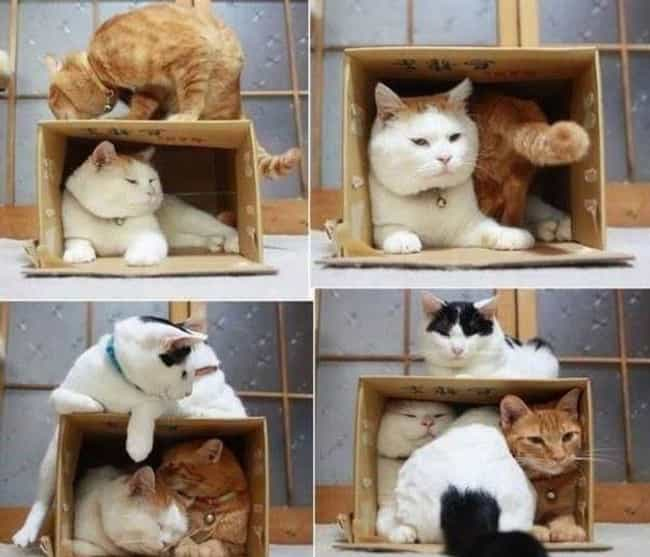 Teamwork Makes the Dream Work is listed (or ranked) 2 on the list Cats and Cardboard: A Photo Love Story
