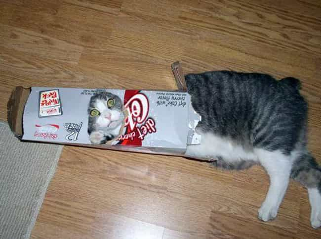 Diet Kitty Wonders If Her New ... is listed (or ranked) 3 on the list Cats and Cardboard: A Photo Love Story