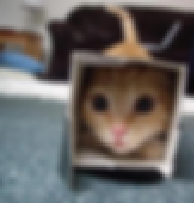 I'm Hidden. You Can't ... is listed (or ranked) 1 on the list Cats and Cardboard: A Photo Love Story