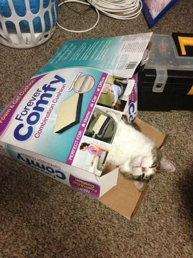 Living up to Advertised Expect... is listed (or ranked) 4 on the list Cats and Cardboard: A Photo Love Story