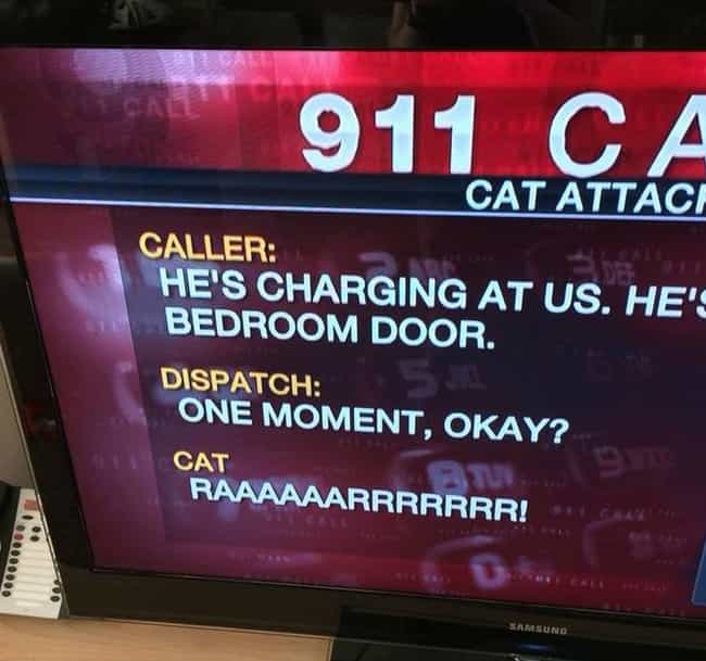 When the Cat's Not Away is listed (or ranked) 4 on the list 38 Local News Captions You Won't Believe Are Real