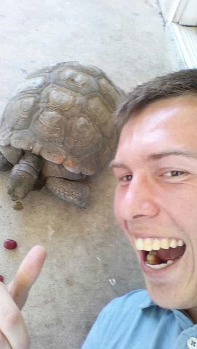 Tourists Keep Turtles fr... is listed (or ranked) 4 on the list Things That Were Destroyed Because of Selfies