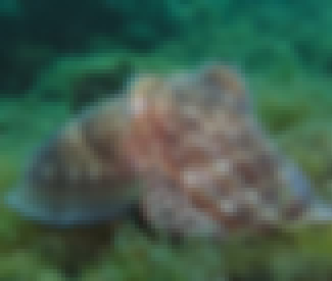 They Have a Different Kind of ... is listed (or ranked) 4 on the list The Most Interesting Facts About Cephalopod Intelligence