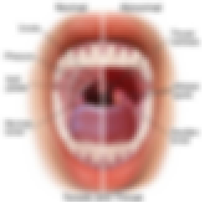 Tonsils is listed (or ranked) 2 on the list The Reasons Why Humans Have Certain Strange Body Parts