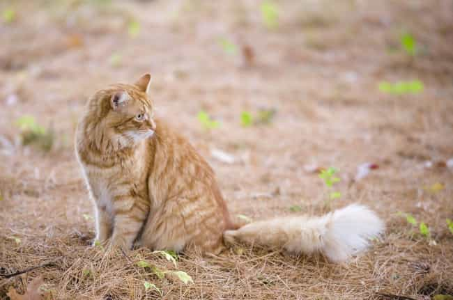 Almost 10 Percent Of Cat... is listed (or ranked) 4 on the list 20 Bizarre Anatomical Features Of Common Animals