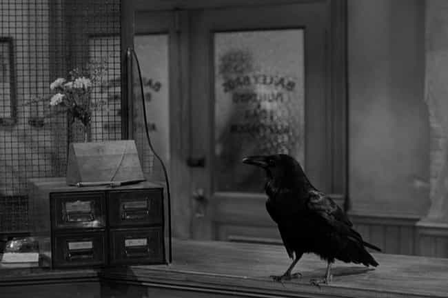 """Adopted Raven Stars in """"It... is listed (or ranked) 4 on the list 10 Fascinating Inside Stories About Animals Cast in Movies"""