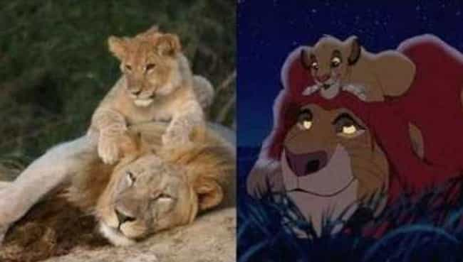 Taking It Lion Down is listed (or ranked) 1 on the list 25 Instances of Life Imitating Art