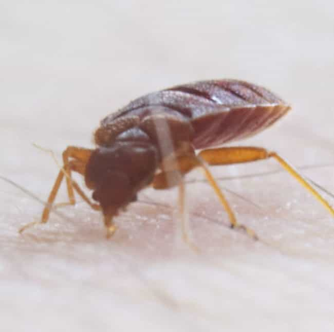 Bed Bugs is listed (or ranked) 4 on the list 14 Creepy Things That Were Found in Libraries