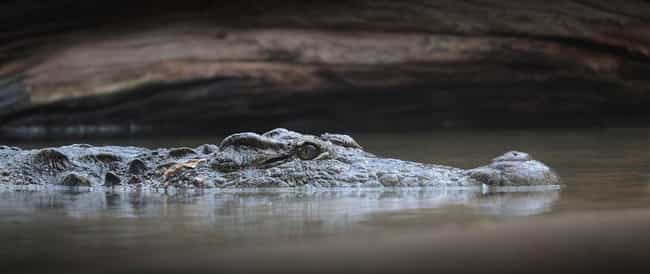 Man Shouts '[Screw] Alligators... is listed (or ranked) 1 on the list The Most Ironic Deaths of All Time (Vol. 2)