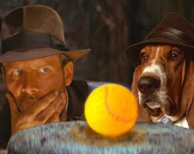 Raiders of the Lost Bark is listed (or ranked) 4 on the list 20 Famous Movie Scenes Improved with Photoshop