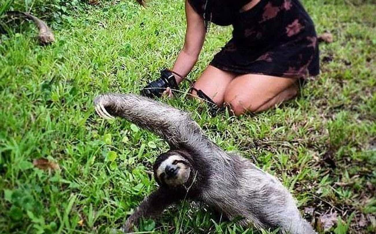 Sloth Serenity is listed (or ranked) 2 on the list 25 Totally Zen Animals Doing Yoga