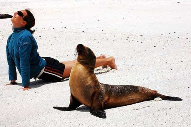 Seal of Approval is listed (or ranked) 3 on the list 25 Totally Zen Animals Doing Yoga