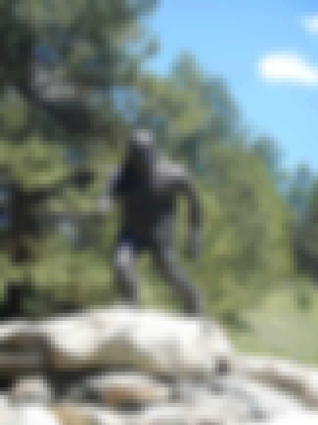 Bigfoot Roams the Banks of the... is listed (or ranked) 7 on the list Creepy Stories and Legends About the Mississippi River