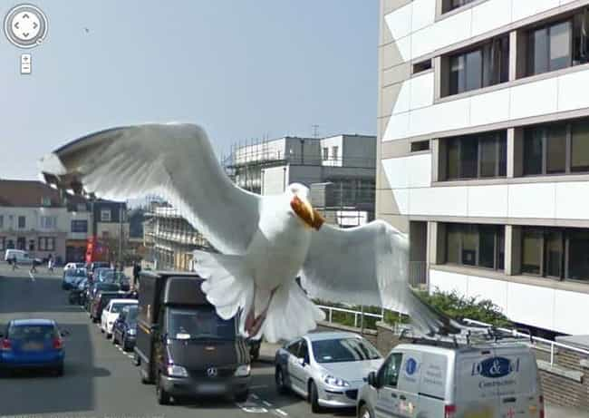 Bird's Eye View is listed (or ranked) 3 on the list The Funniest Moments in Google Maps History