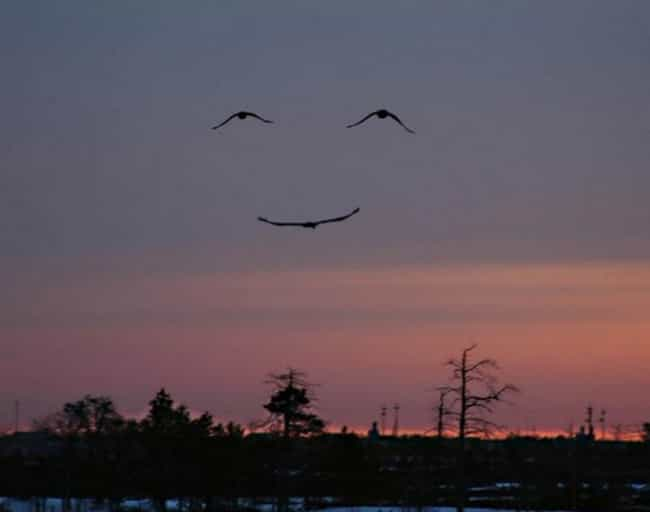 Have a Nice Day is listed (or ranked) 1 on the list 20 Incredible 'Once In A Lifetime' Photos Taken At The Perfect Time