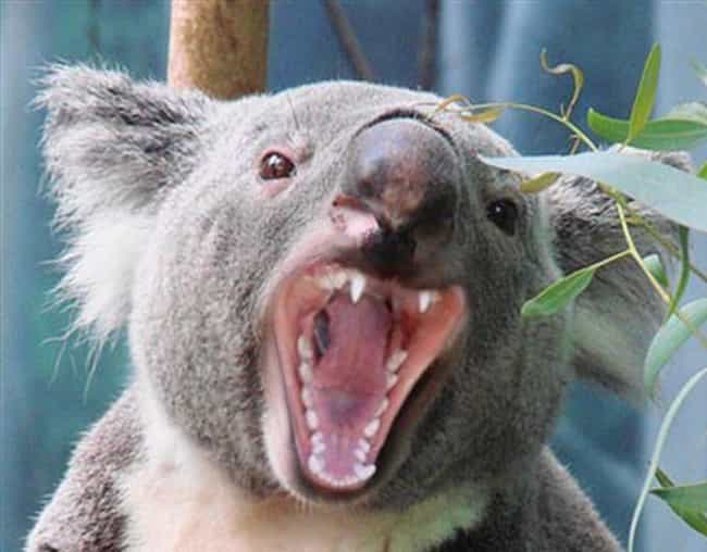 Just When You Thought You Were... is listed (or ranked) 1 on the list 19 Photos of Your Favorite Cute Animals Looking Terrifyingly Scary