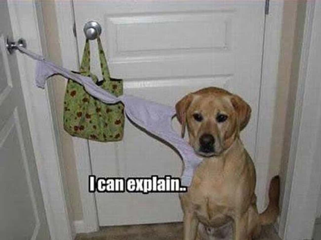 """Sup Bra! is listed (or ranked) 2 on the list The Funniest """"Caught in the Act"""" Photos Ever"""