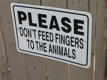 Food for Thought is listed (or ranked) 5 on the list The Funniest Signs at the Zoo