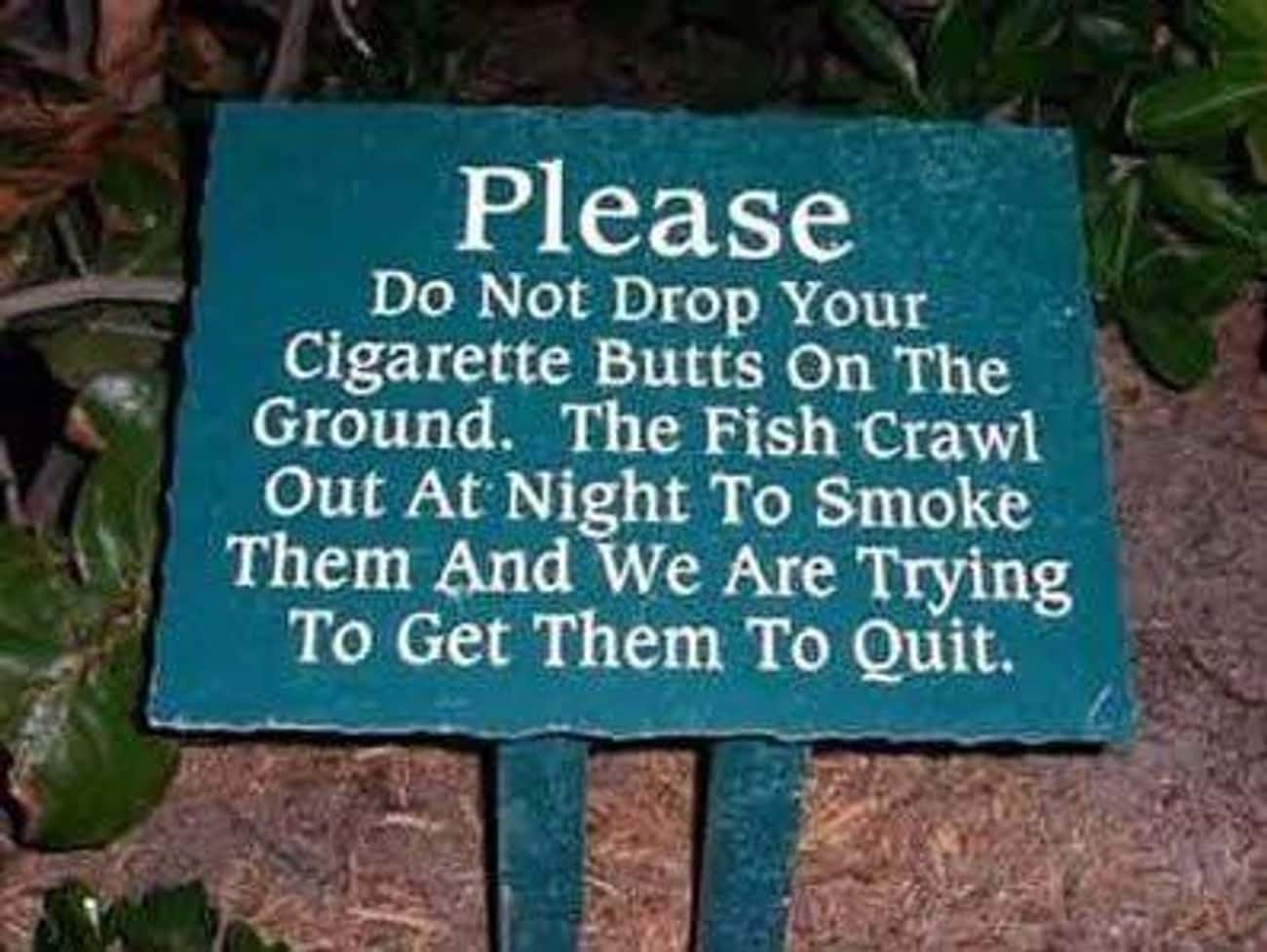 Smoked Fish is listed (or ranked) 3 on the list The Funniest Signs at the Zoo