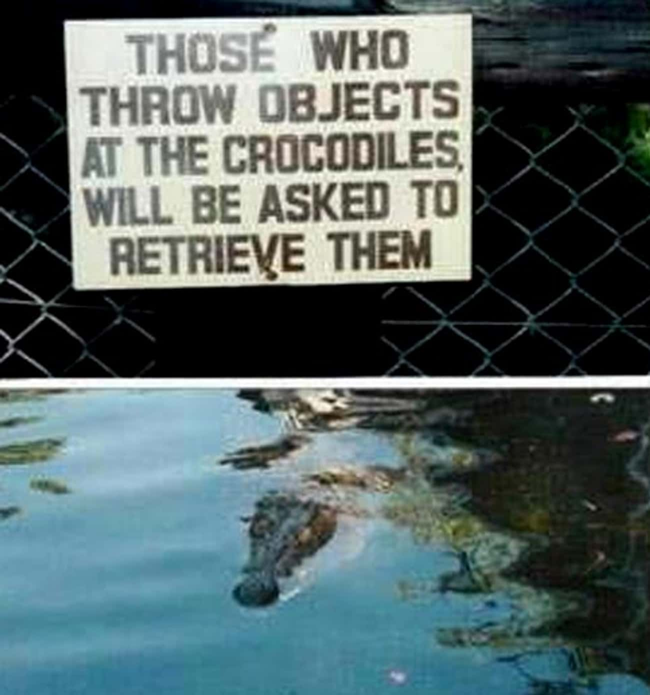 What a Croc is listed (or ranked) 2 on the list The Funniest Signs at the Zoo
