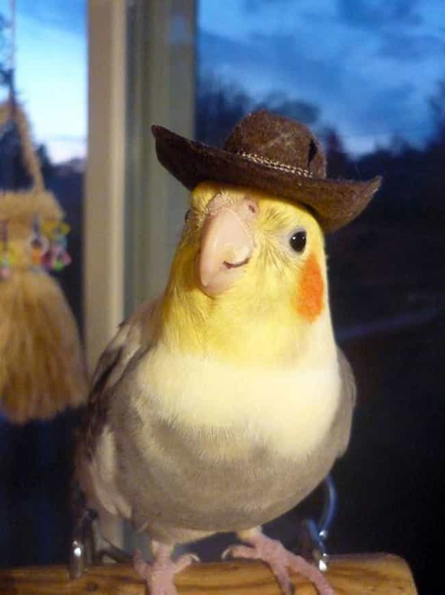 """There's a New Sheriff... is listed (or ranked) 1 on the list Birds All Decked Out in Adorable Hats"
