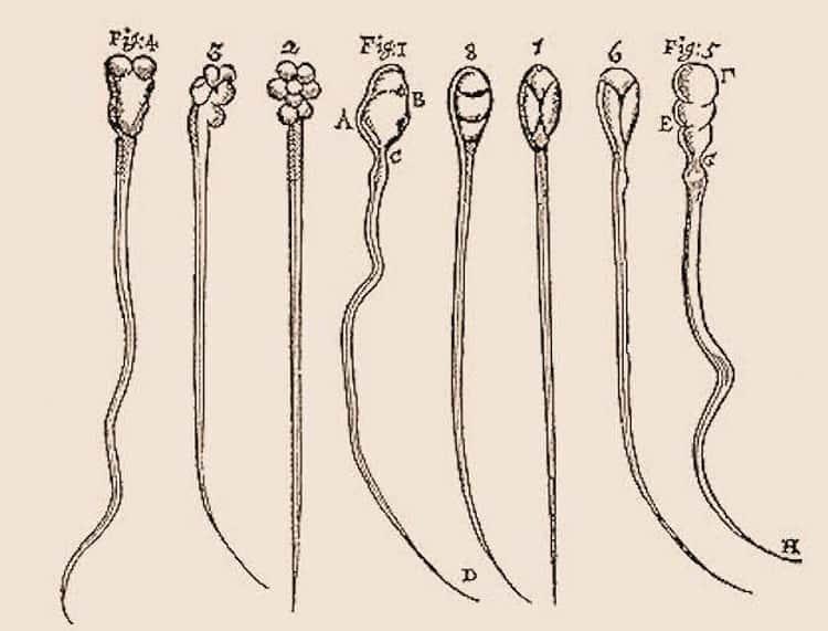 Antonie van Leeuwenhoek Discovered Sperm Cells Using His Own Fluids