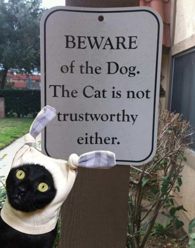 """Trust Issues is listed (or ranked) 3 on the list Funny """"Beware of Cat"""" Signs to Be Taken Seriously"""