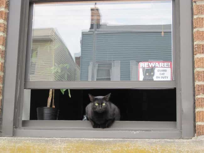 """Guardian of the Galaxy ... is listed (or ranked) 4 on the list Funny """"Beware of Cat"""" Signs to Be Taken Seriously"""