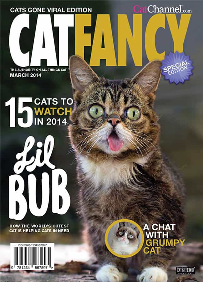 Bub on Fashion is listed (or ranked) 3 on the list The Most Regal Felines from the Cover of Cat Fancy