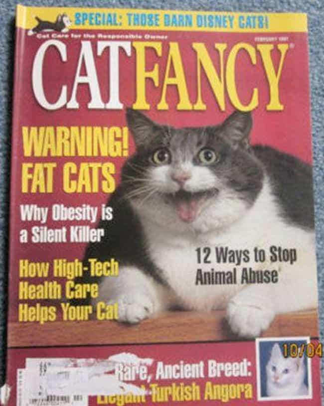 Big Fat Grin is listed (or ranked) 1 on the list The Most Regal Felines from the Cover of Cat Fancy