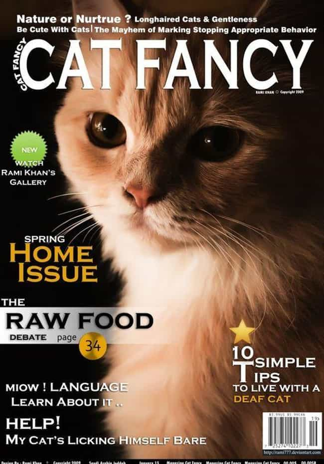 Meow-nificent is listed (or ranked) 4 on the list The Most Regal Felines from the Cover of Cat Fancy