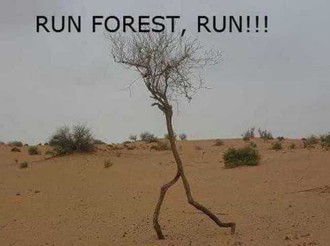 To Tree or Not to Tree is listed (or ranked) 3 on the list The Greatest Visual Puns in the History of the Internet