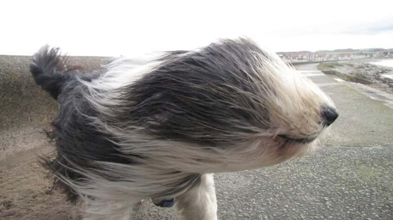 """Hair of the Dog is listed (or ranked) 2 on the list The Funniest """"Windy Day"""" Photos Ever"""