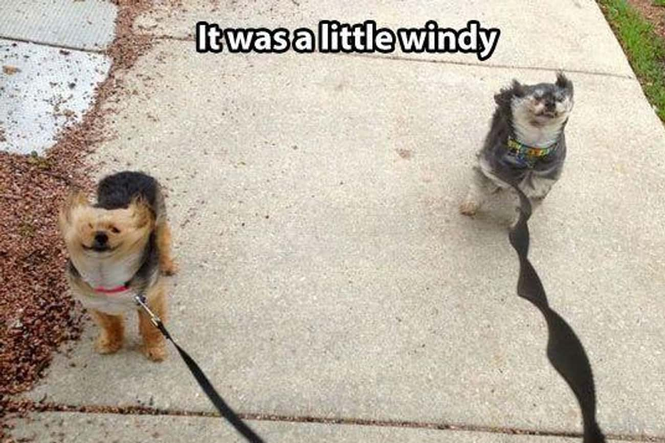 """Gone with the Wind is listed (or ranked) 1 on the list The Funniest """"Windy Day"""" Photos Ever"""