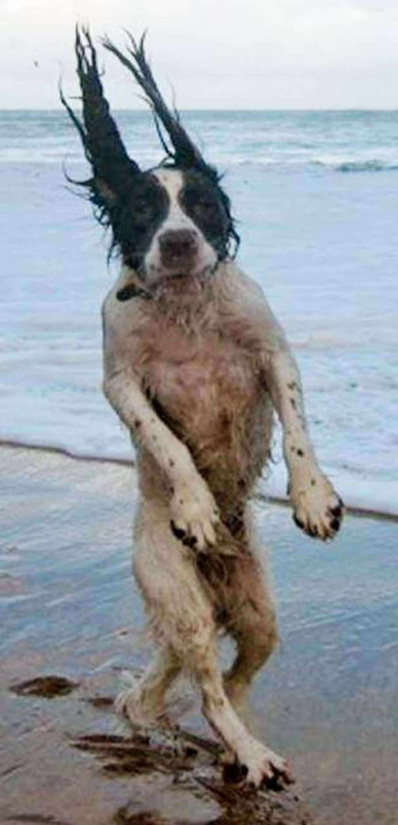 """Totally Blown Away is listed (or ranked) 3 on the list The Funniest """"Windy Day"""" Photos Ever"""