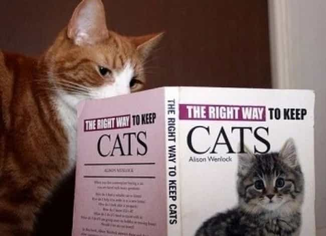 Playing Your Cards Right is listed (or ranked) 1 on the list Cats Reading Books About Cats