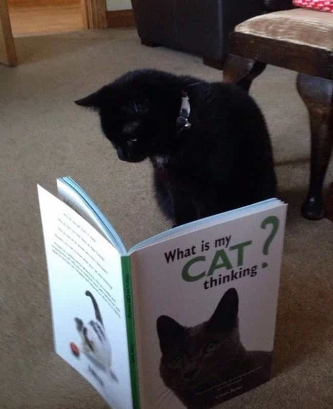It's a Thinking Cat's ... is listed (or ranked) 3 on the list Cats Reading Books About Cats