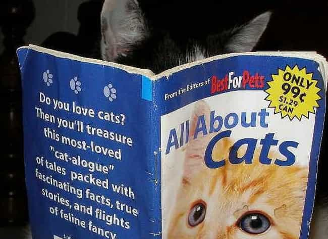The Purrfect Storm is listed (or ranked) 2 on the list Cats Reading Books About Cats