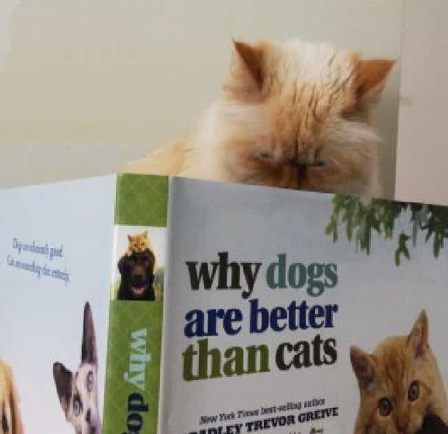 This Book is Total Bullsh*t is listed (or ranked) 4 on the list Cats Reading Books About Cats