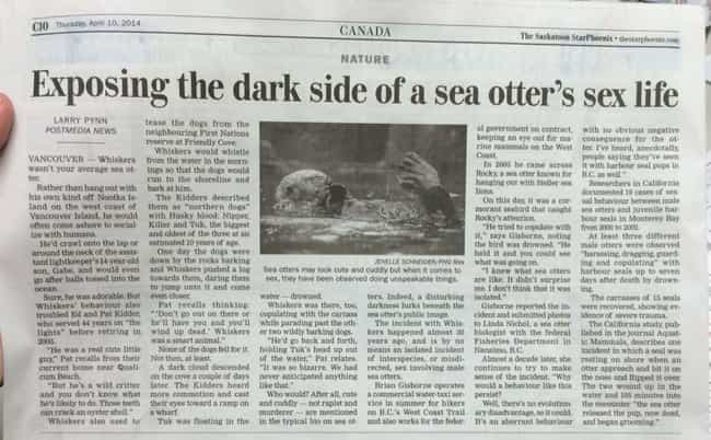 Otter This World is listed (or ranked) 2 on the list The 26 Most Canadian Headlines Ever Written