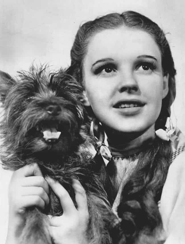 Toto's Final Resting Place... is listed (or ranked) 1 on the list Strange Things You Definitely Didn't Know About The Wizard of Oz