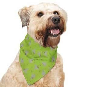 Insect Shield is listed (or ranked) 9 on the list The Best Pet Clothing Brands