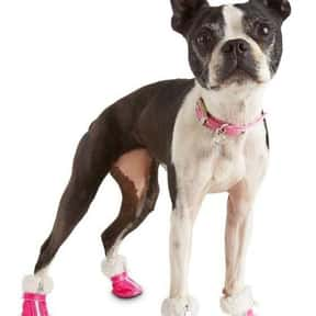 Pup Crew is listed (or ranked) 4 on the list The Best Pet Clothing Brands