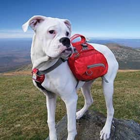 Kurgo is listed (or ranked) 15 on the list The Best Pet Clothing Brands
