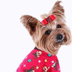 Bond & Co is listed (or ranked) 10 on the list The Best Pet Clothing Brands