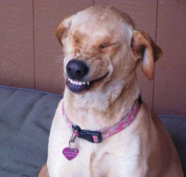 """Ruff Sneeze is listed (or ranked) 2 on the list The Funniest """"Caught Mid-Sneeze"""" Photos Ever"""